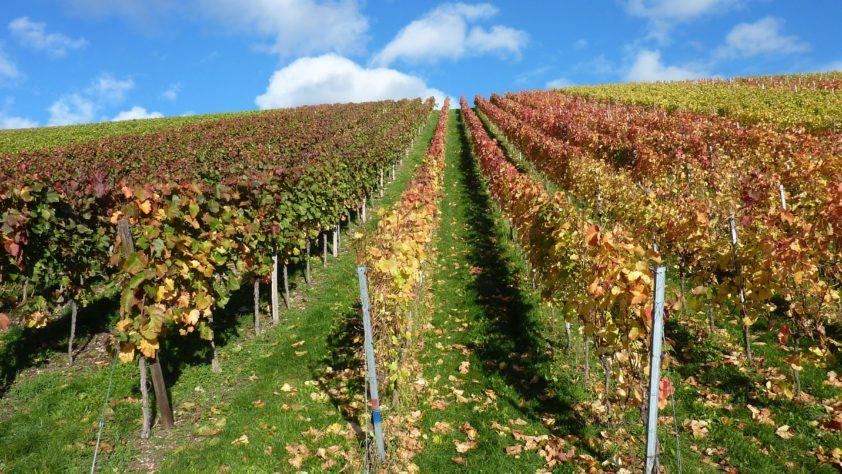 Kohle, Wein und neues Land