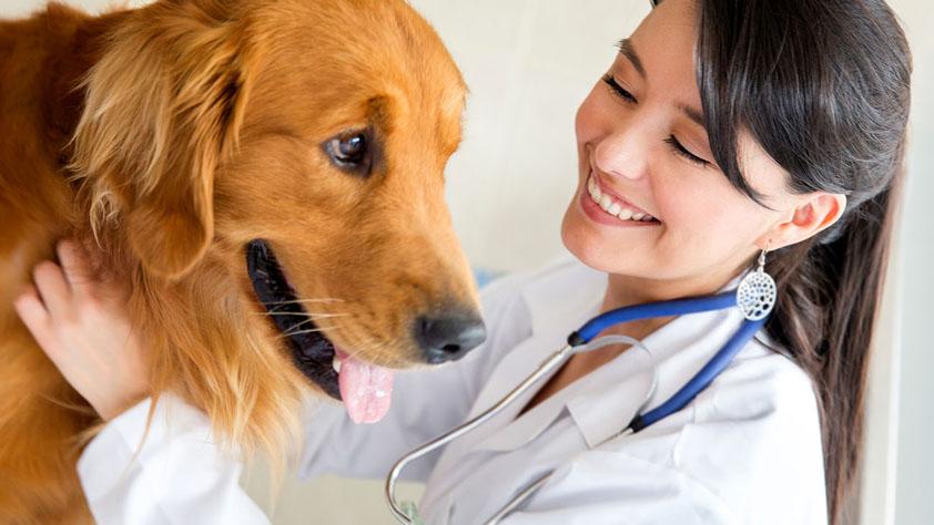 Tierarztpraxis Thomas Kühnel – Calau